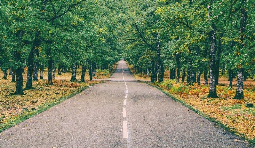 Впарке «Наталка» хотят создать автодорогу