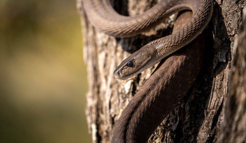 ВМОЗ рассказали, что делать при укусе змеи
