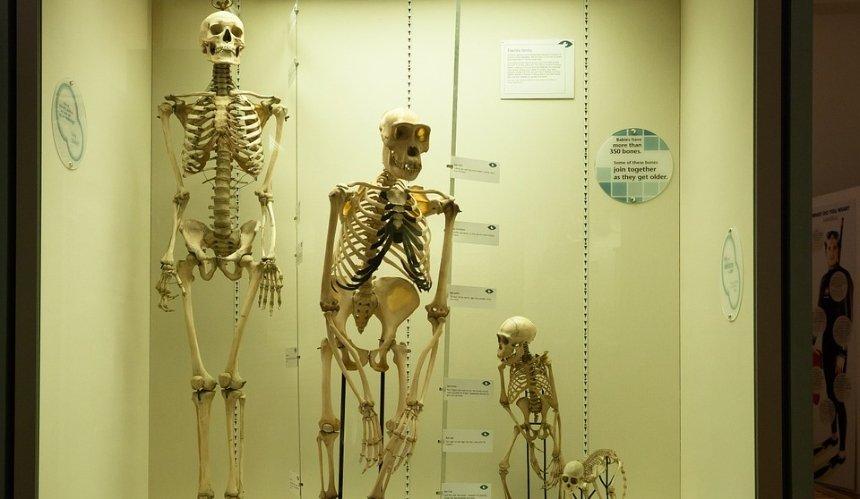 В Израиле обнаружили ранее неизвестный вид доисторических людей