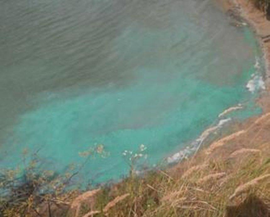 Столичное озеро Министерка стало зеленым (фото)