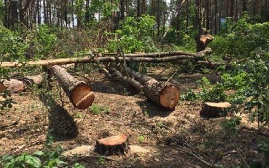 Под Киевом неизвестные вырубают лес, местные жители перекрыли трассу (фото, видео)