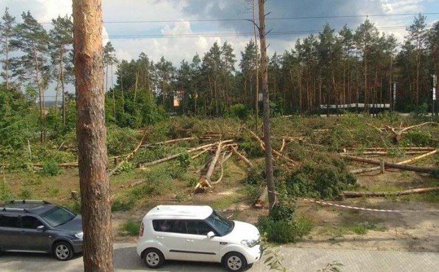 Под Киевом вырубили сосновый лес для постройки торгового центра (фото, видео)