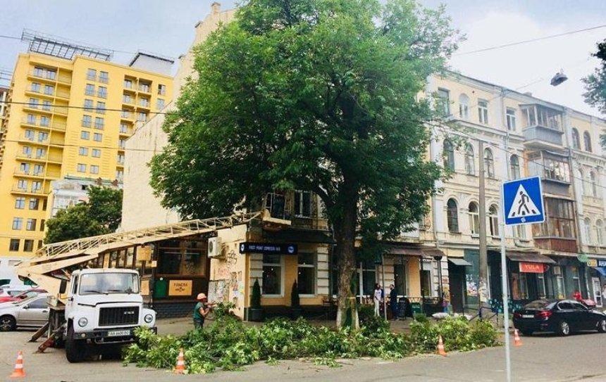 Кофейня на Подоле собирает деньги на спасение 70-летнего ясеня