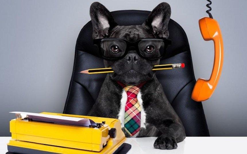 Жители столицы придут на работу со своими собаками