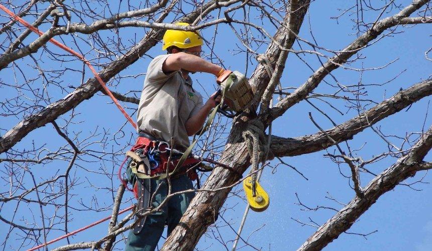 «Київзеленбуд» разработал первые вУкраине правила ухода закронами деревьев