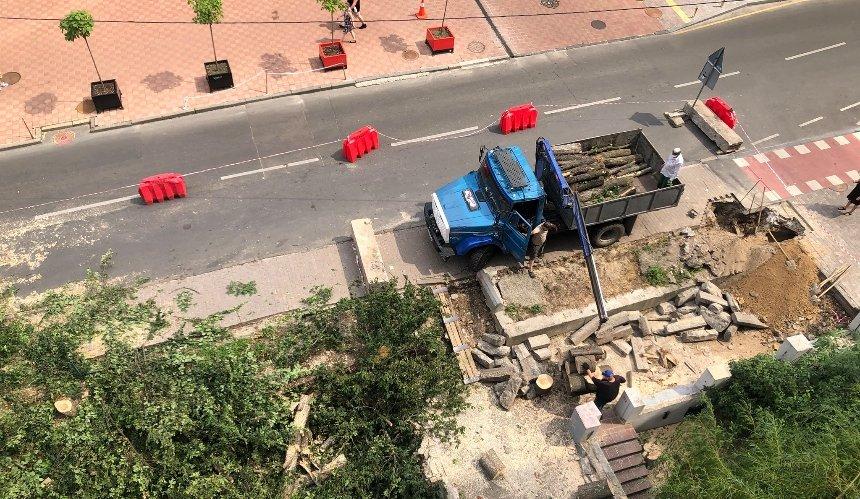 В центре столицы вырубили несколько деревьев: в чем причина