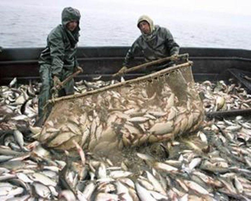 Ярема Ковалів: Мораторій на промисловий вилов риби – не вирішення проблем рибної галузі