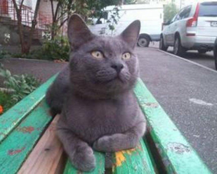 В Киеве на Позняках ищут хозяев дымчатого кота-потеряшки