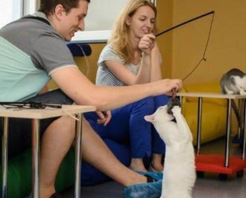 В Киеве открылось кафе с котами (фото)