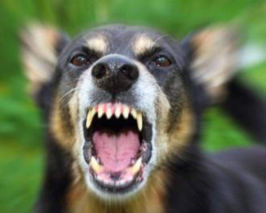 В Киеве школьника покусала собака