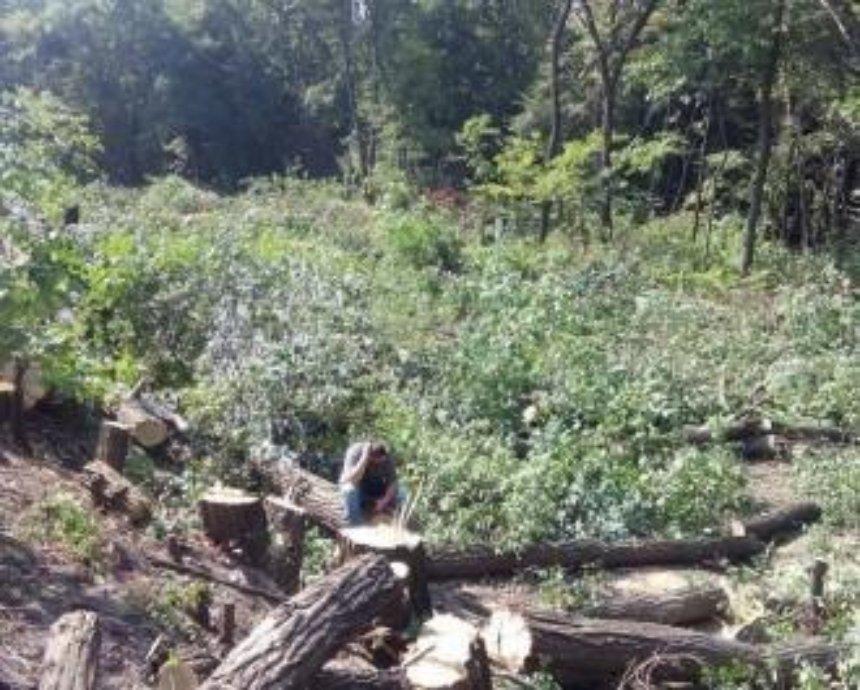 Часть Голосеевского парка уничтожили ради заправки