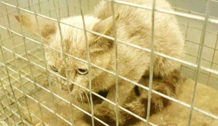 В киевском метро несколько дней ловили потерявшегося котенка