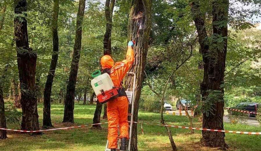 В Сырецком парке уничтожили гнездо опасных шершней