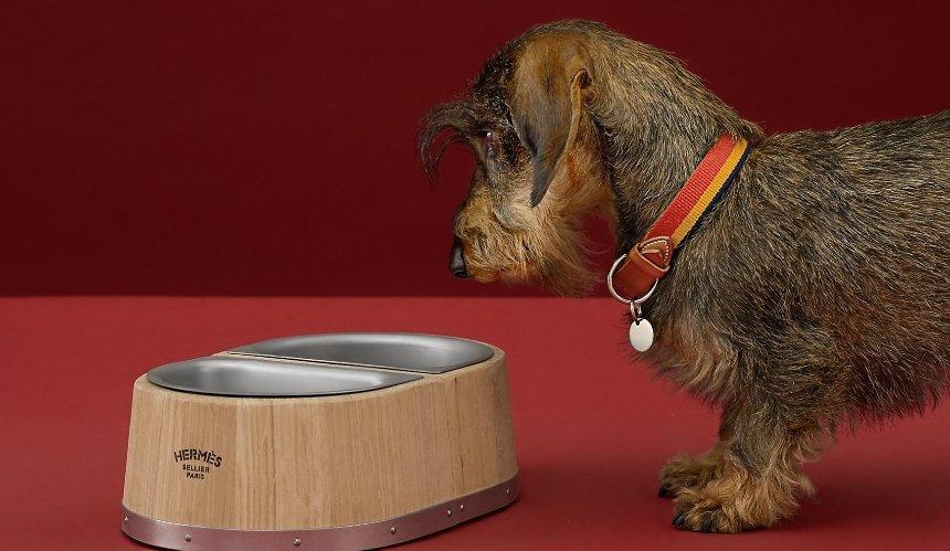 Бренд Hermès выпустил миску для собак, которая стоит более 1000 долларов
