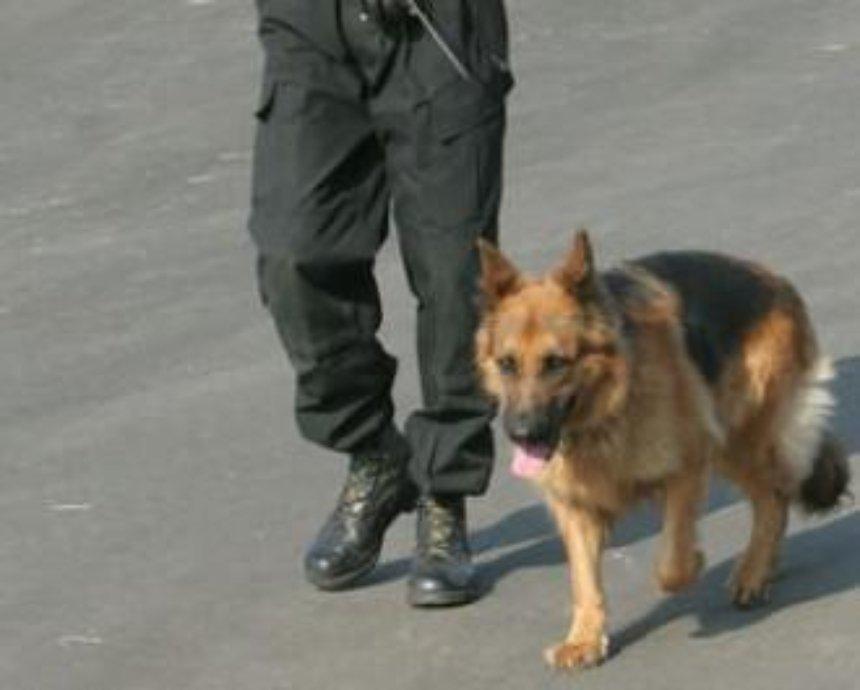 Киевлян в метро будут охранять специальные собаки