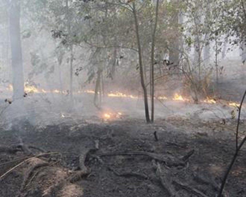 Киевлянам посоветовали не паниковать из-за дыма и пить молоко