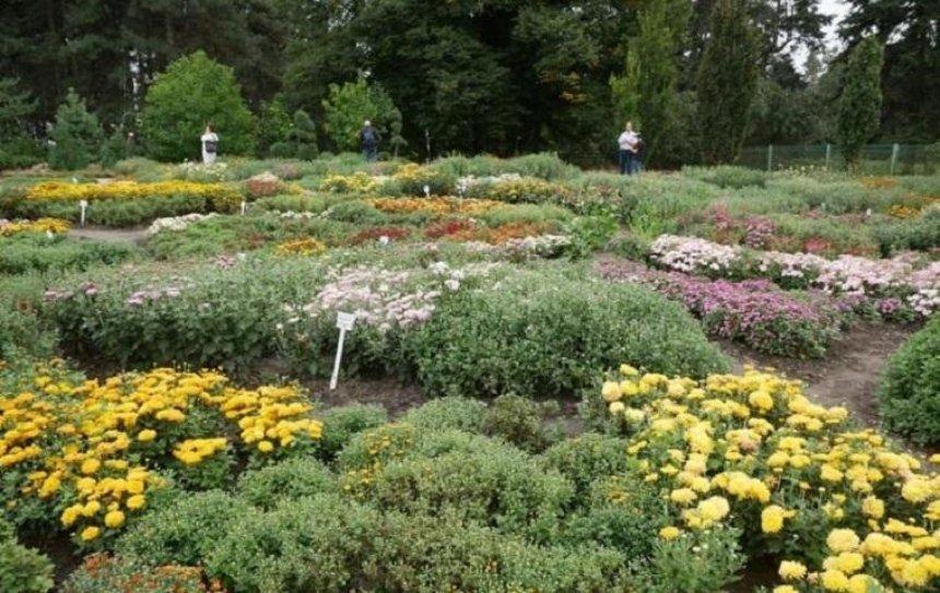 В Ботсаду имени Гришко приглашают посмотреть на цветущие цветы осени (фото)