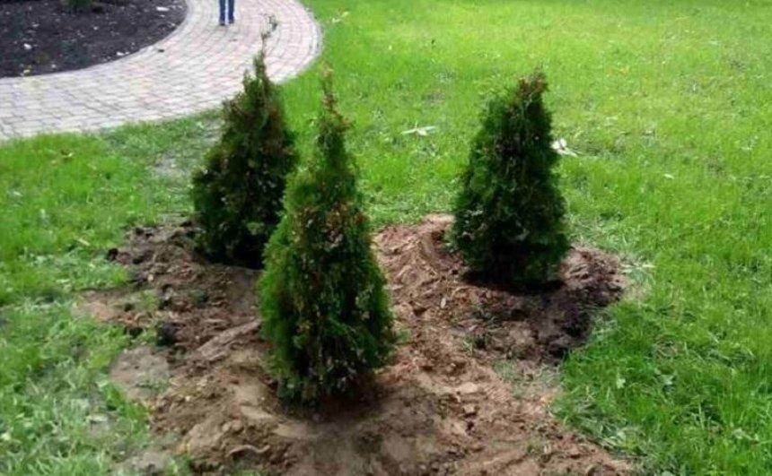 Вандалы похитили новые туи из Сырецкого парка (фото) (обновлено)