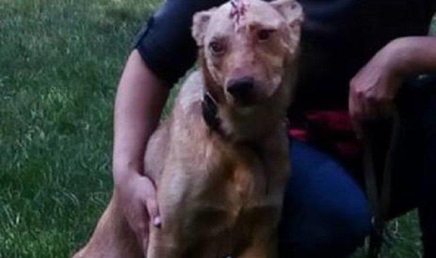 Жители столицы спасли пострадавшую от живодера собаку (фото)