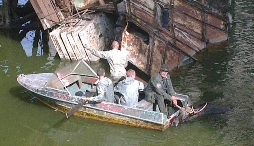 В Чернобыльской зоне из реки спасли лося (фото, видео)