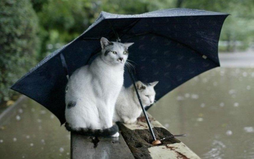 Прощай, лето: синоптик рассказала о погоде на выходных