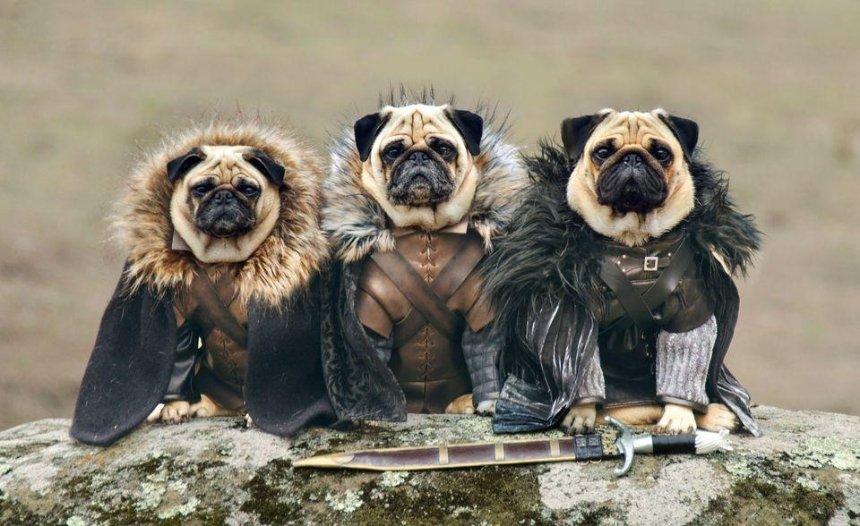 На Comic Con Ukraine устроят массовое собачье косплей-дефиле