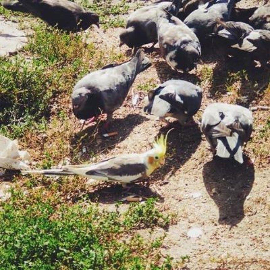 Возвращение блудного попугая: в Киеве спасли сбежавшего пернатого