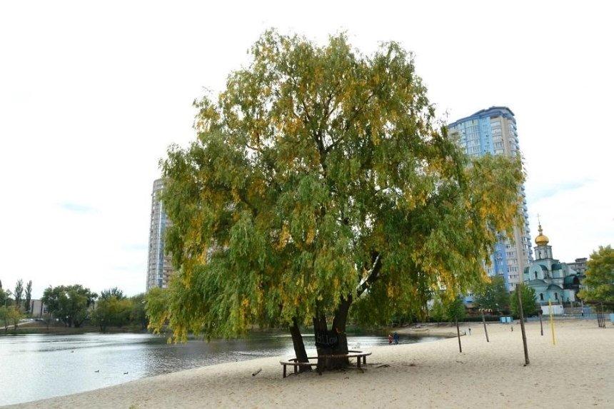 На«Дерево Цоя» установили охранный знак