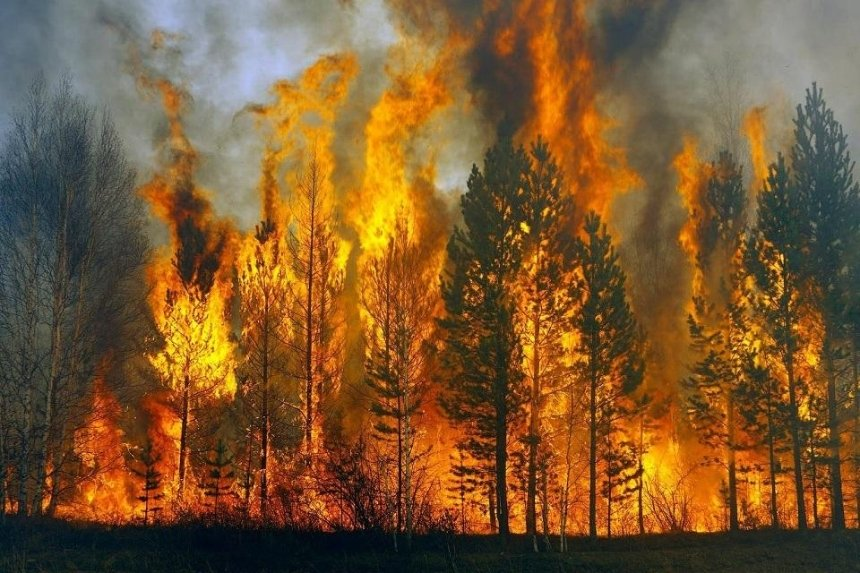 ВР приняла в первом чтении законопроект, ужесточающий наказание за поджог травы и лесные пожары