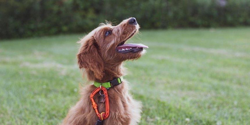 На Днепровской набережной появилась площадка для выгула собак