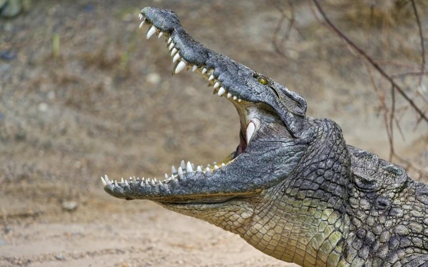 Украина хочет импортировать из ЮАР мясо крокодилов