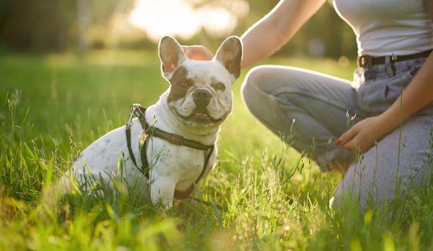 ВоЛьвове появился уникальный сенсорный сад для собак