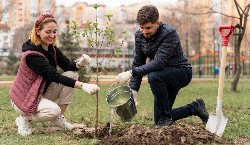 ВКиеве бесплатно раздают саженцы деревьев: как игде ихполучить