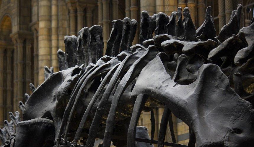 В Киевской области нашли кости динозавров