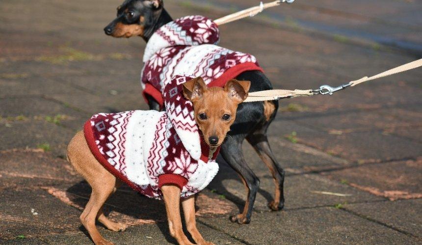 Как правильно выбрать осеннюю одежду для питомцев: советы ветеринаров