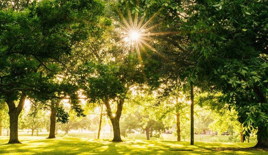 ВКиеве хотят обустроить новые зеленые зоны: адреса