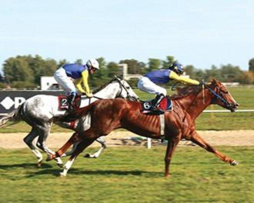В Киеве проведут бесплатные конные гонки