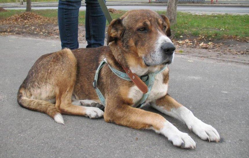 Выставили с креслом: волонтер просит помощи для брошенной собаки