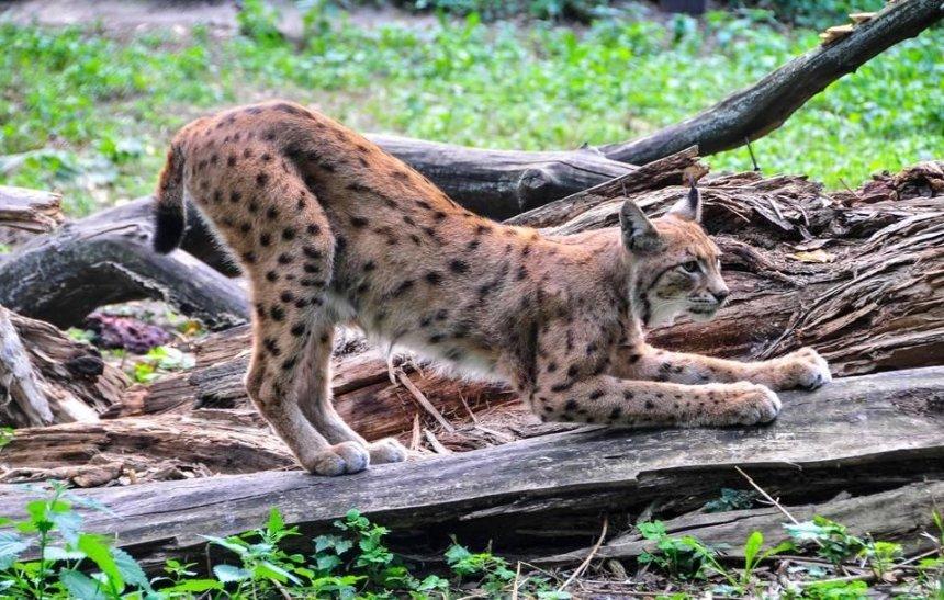 Київський зоопарк став кандидатом у члени престижної міжнародної організації