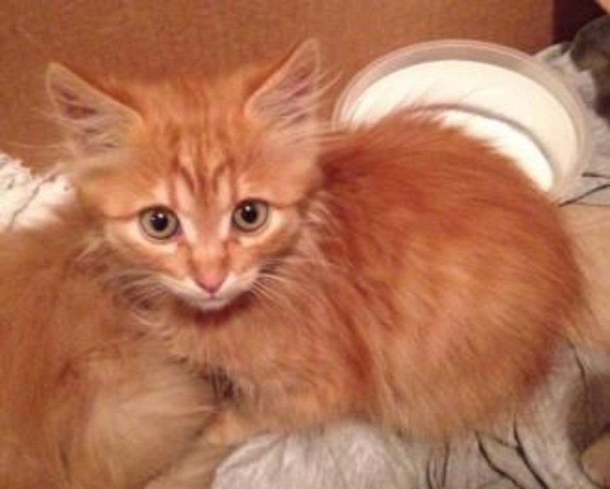 Кошкин дом: пять котят ищут хозяина
