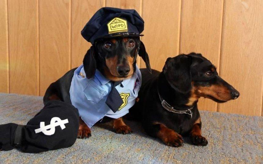 В столиці з'явиться поліція для тварин (відео)