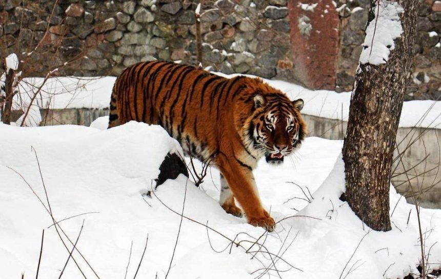 Как животных Киевского зоопарка готовят к зиме (видео)