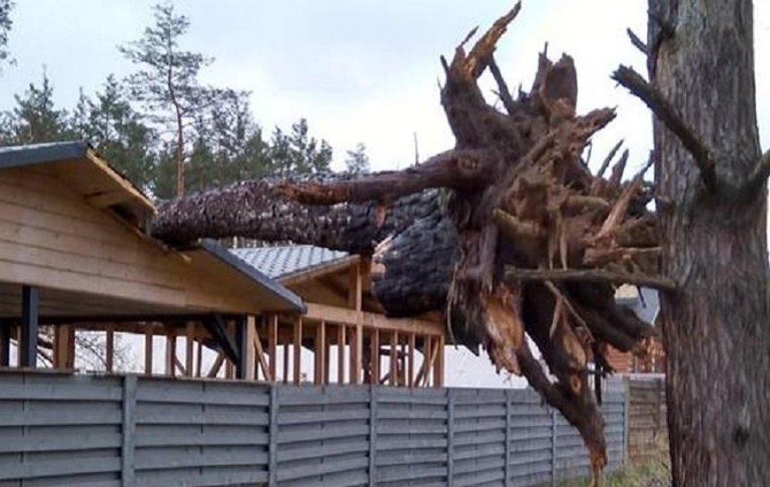 Буйство стихии: под Киевом сильный ветер повалил с десяток деревьев (фото)