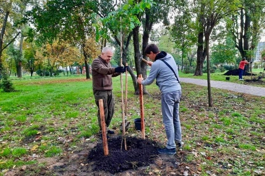 Впарке Соломенского района высадили тюльпановые деревья, березы иакации