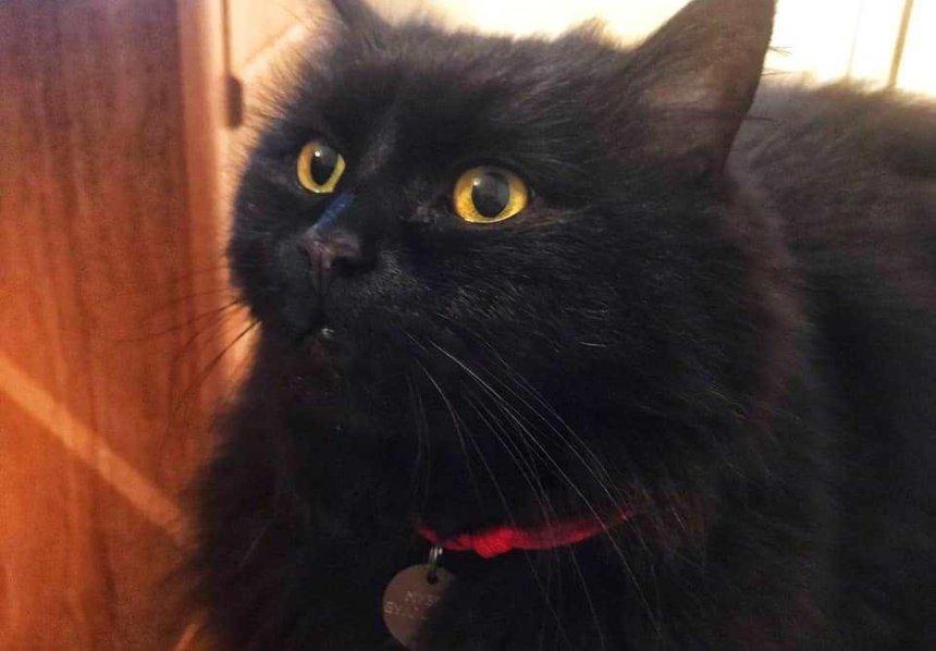 Пропала кошка из музея Булгакова