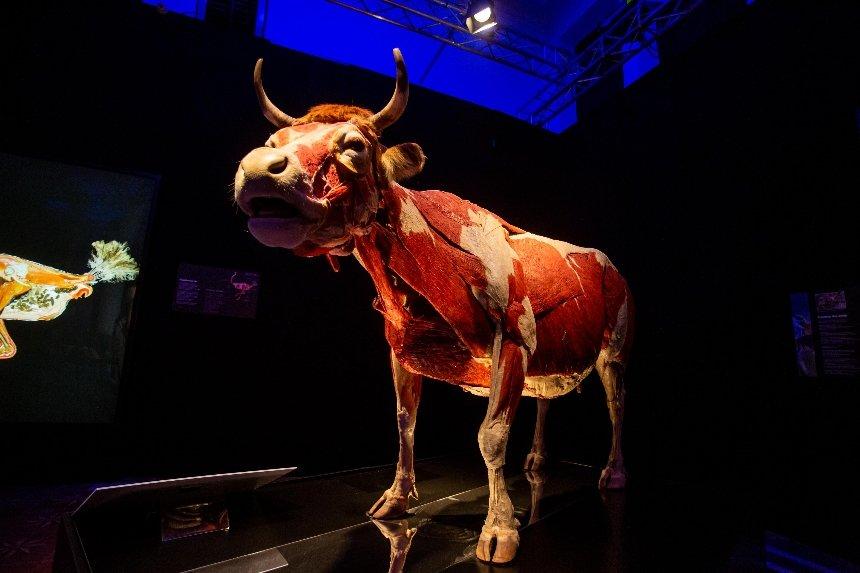 Это гид по выставке тел «Всесвіт тіла: Всередині тварин»