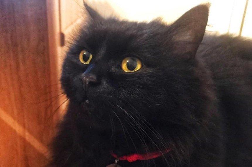 Кошку из Музея Булгакова нашли мертвой
