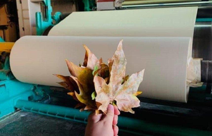 В Украине выпустили бумагу из опавших листьев