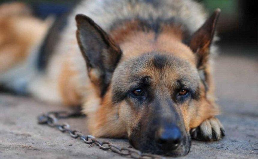 """Жорстоке вбивство: мешканець Харкова """"замовив"""" свого собаку"""