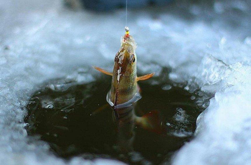 У Києві та області заборонили виловлювати рибу